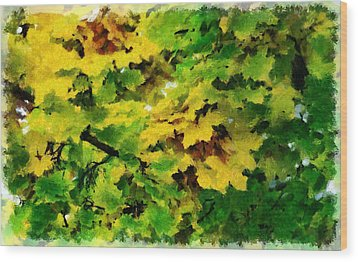 Changing Leaves Wood Print by Russ Harris