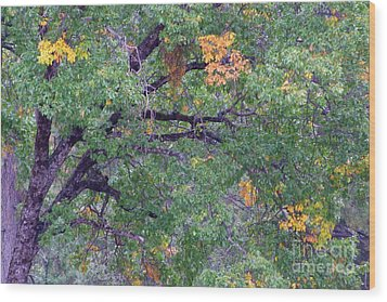 Changing Of The Seasons Wood Print by Mary Deal
