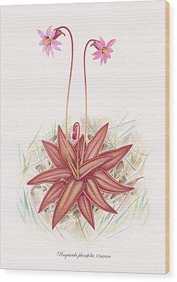 Chapman's Butterwort Wood Print by Scott Bennett