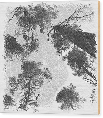 Charcoal Trees Wood Print by RKAB Works