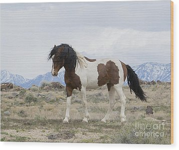 Charger Wood Print by Nicole Markmann Nelson