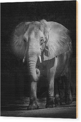 Charging Elephant Wood Print