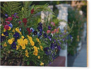 Charleston Flower Boxes Wood Print by Melissa Wyatt