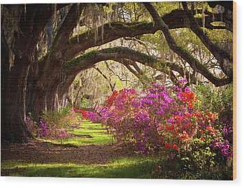 Charleston Sc Magnolia Plantation Gardens - Memory Lane Wood Print