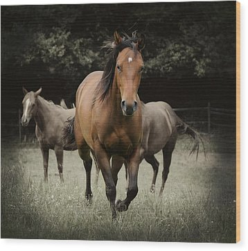 Charlie And Friends Wood Print by Jana Goode