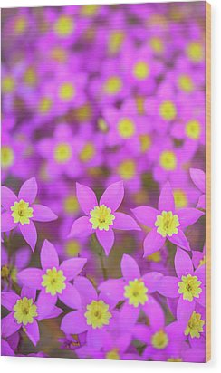 Wood Print featuring the photograph Charming Centaury by Alexander Kunz