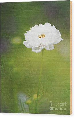 Charming White Cosmos Wood Print