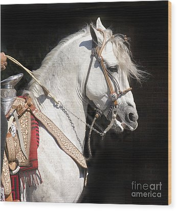 Charro Stallion Wood Print