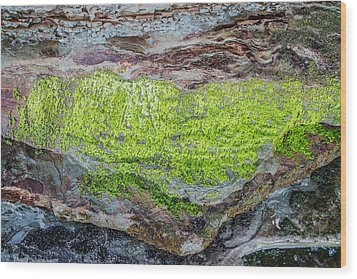 Chartreuse Abstraction Wood Print