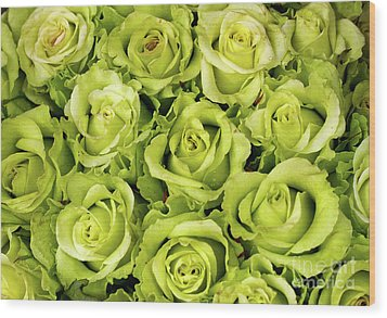 Chartreuse Colored Roses Wood Print
