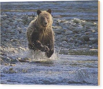 Chasing Salmon Wood Print by Inge Riis McDonald