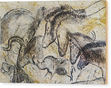 Chauvet Horses Aurochs And Rhinoceros Wood Print