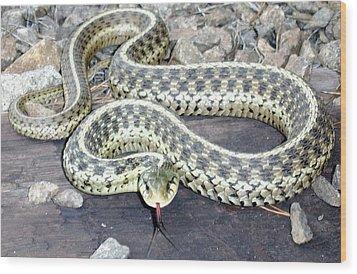 Checkered Garter Snake Wood Print
