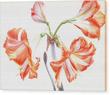Cheery Amaryllis  Wood Print