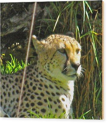 Cheetah   Face Wood Print by Debra     Vatalaro