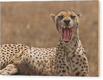 Cheetah Wood Print by Adam Romanowicz