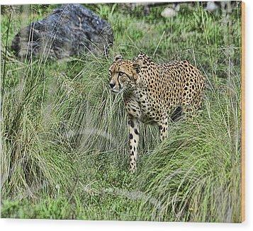 Cheetah Hunting Wood Print