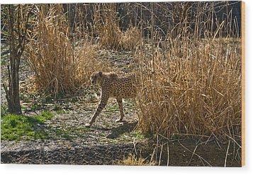 Cheetah  In The Brush Wood Print by Douglas Barnett