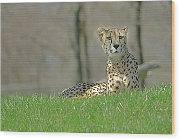 Wood Print featuring the photograph Cheetah by JT Lewis