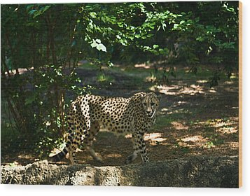 Cheetah On The In The Forest 2 Wood Print by Douglas Barnett