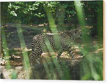 Cheetah On The In The Forest Wood Print by Douglas Barnett