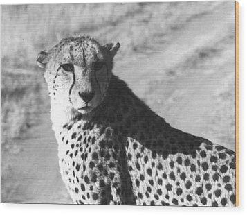 Cheetah Pose Wood Print by Susan Chandler