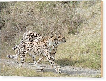 Wood Print featuring the photograph Cheetah Trot 2 by Fraida Gutovich