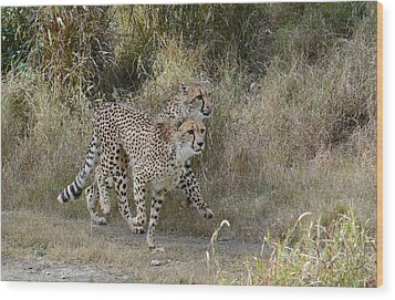 Wood Print featuring the photograph Cheetah Trot by Fraida Gutovich