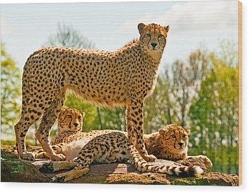 Cheetahs Three Wood Print