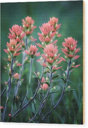 Cherokee Prairie Paintbrush Wood Print by James Barber
