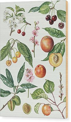 Cherries And Other Fruit-bearing Trees  Wood Print by Elizabeth Rice