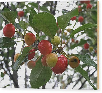 Wood Print featuring the photograph Cherries In The Morning Rain by Angie Rea