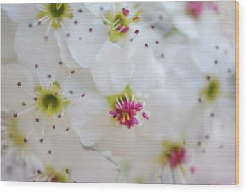Wood Print featuring the photograph Cherry Blooms by Darren White