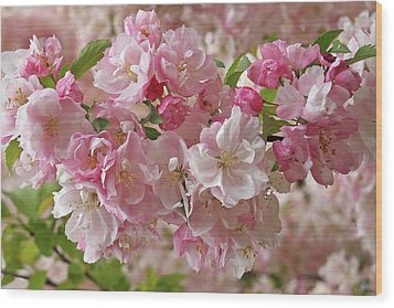 Wood Print featuring the photograph Cherry Blossom Closeup by Gill Billington