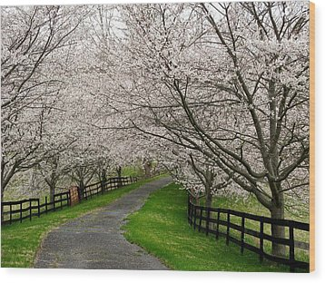 Cherry Blossom Lane Wood Print by Joyce Kimble Smith