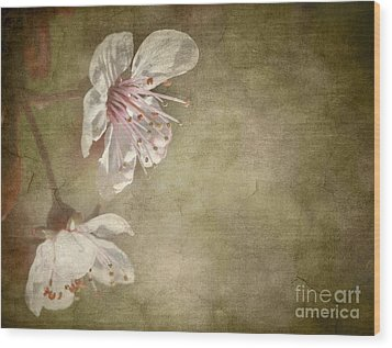 Cherry Blossom Wood Print by Meirion Matthias