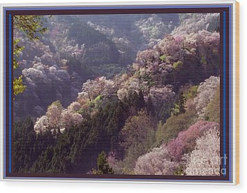 Cherry Blossom Season In Japan Wood Print