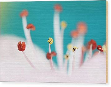 Wood Print featuring the photograph Cherry Blossom by Sharon Johnstone