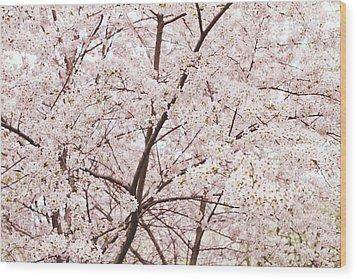 Cherry Blossom Spring Wood Print by Ariane Moshayedi
