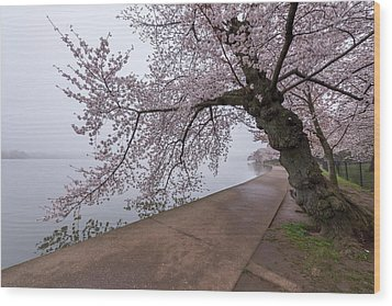 Cherry Blossom Tree In Fog Wood Print
