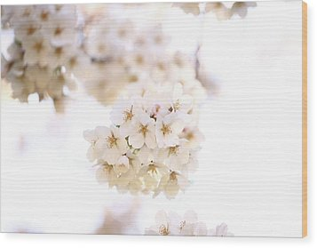 Wood Print featuring the photograph Cherry Blossoms - A by Anthony Rego