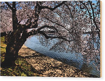 Cherry Blossoms - Washington Dc Wood Print by Wayne Higgs