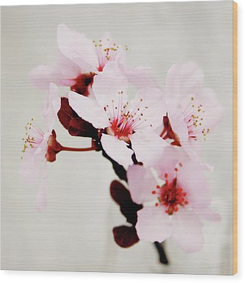 Wood Print featuring the mixed media Cherry Blossoms 1- Art By Linda Woods by Linda Woods