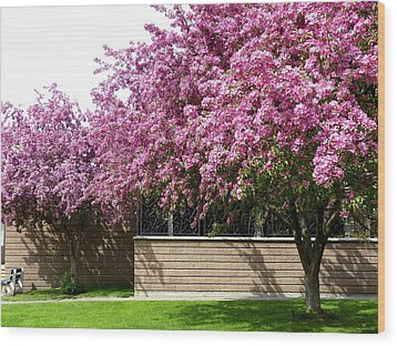 Cherry Blossoms 1 Wood Print by Will Borden