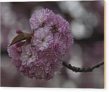 Cherry Blossoms 2 Wood Print by Robert Ullmann