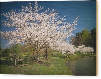 Cherry Blossoms At Meadowlark Two Wood Print by Susan Isakson
