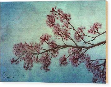 Cherry Blossoms Wood Print by Christine Hauber