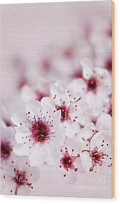 Cherry Blossoms Wood Print by Elena Elisseeva