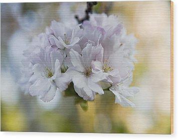 Cherry Blossoms Wood Print by Frank Tschakert