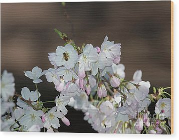 Cherry Blossoms Wood Print by Glenn Franco Simmons